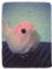 id:qoomee