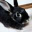id:rabbit_runa