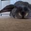 id:rabbittail-ko