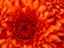id:ran-0429