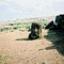rapanui2003