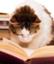 readingabook