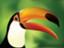recoverhornbill