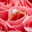 id:ring_study