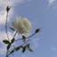 id:rojiura2