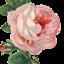 rosalie0321