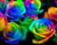rose-honey-55