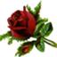 id:rose_s