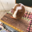 ryu_reader