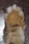 id:ryudorootchild