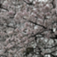 id:ryuryumama