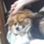 id:s-dai101030
