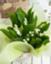 id:s-t-s_520-1011-527