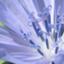 id:sacredaroma