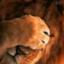 safari029