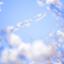 saku_ha_020226