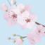 id:sakurabiyori-ah