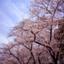 id:sakurairo270