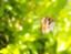 id:sanaginagisa333
