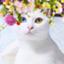 sangoruka_cats