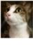 id:saorockcat