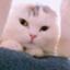 sea-cat0718