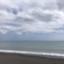 seafree