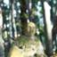 id:senjingaran5