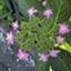 id:sepyas
