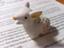 shiho_rosy