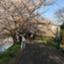 shimasachi