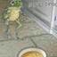 shimothefrog
