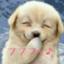 shin777santa