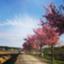 id:shinomonsan