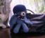 id:shinonomeakari