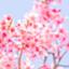 id:shinri-oiso