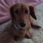 shinya_kitaoka