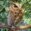 shinya_owl_net