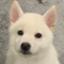 id:shiroi_okome