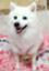 id:shirokun0806