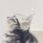 id:shirosmile