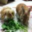 shoji_takahashi