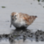 id:shorebird