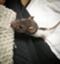 id:sirokuma_n