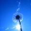 id:sky-graph