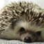 sleepyhedgehog