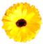 id:slowly_1029