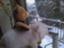 snow-much