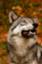 id:snowwolf0214
