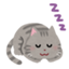 sockscat